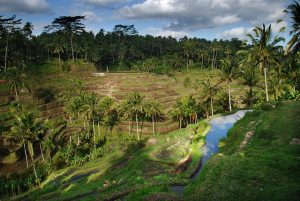 American: Portland – Bali, Indonesia. $352. Roundtrip, including all Taxes