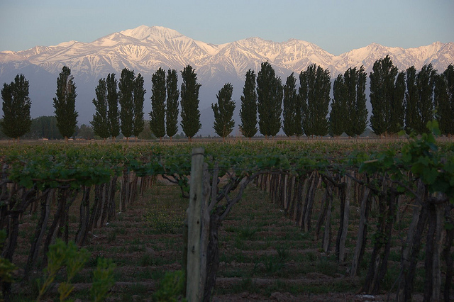 Copa: San Francisco – Mendoza, Argentina. $599. Roundtrip, including all Taxes