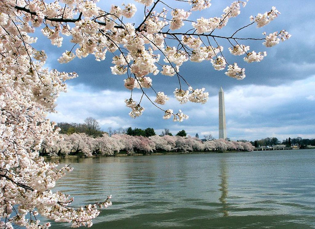 American: Los Angeles – Washington D.C. (and vice versa) $257. Roundtrip, including all Taxes